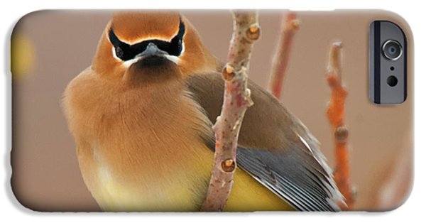 Cedar Wax Wing IPhone 6s Case by Carl Shaw