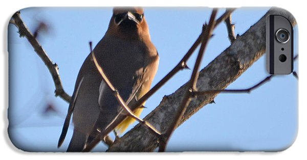 Cedar Wax Wing On The Lookout IPhone 6s Case