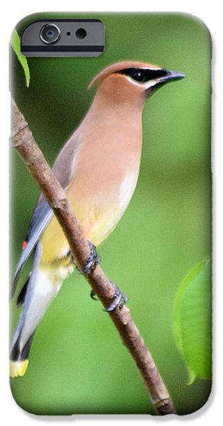 Cedar Wax Wing Profile IPhone 6s Case by Sheri McLeroy
