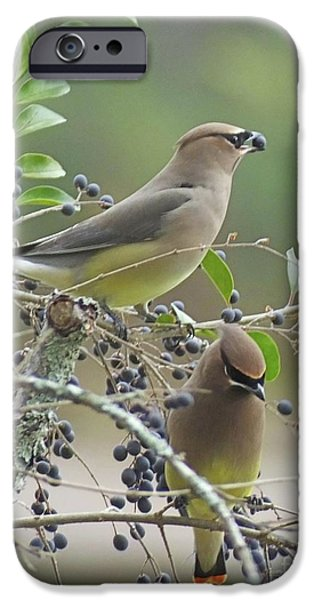 Cedar Wax Wings IPhone 6s Case by Lizi Beard-Ward
