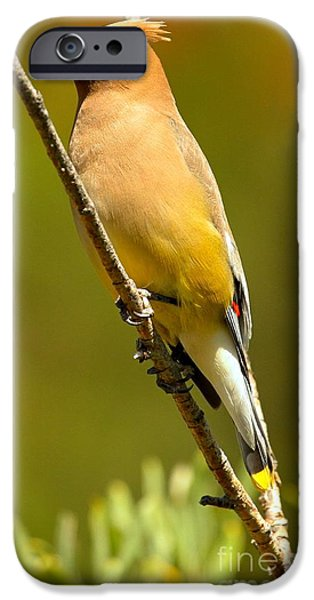 Cedar Waxwing IPhone 6s Case by Adam Jewell