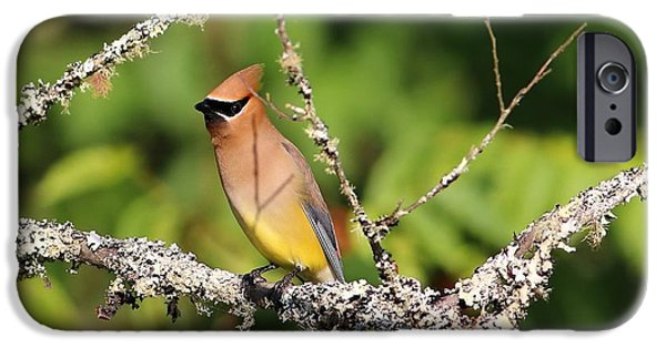 Cedar Waxwing  IPhone 6s Case by Carol R Montoya