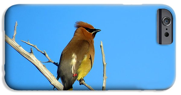 Cedar Waxwing IPhone 6s Case by Dianne Cowen