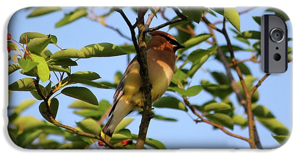 Cedar Waxwing IPhone 6s Case by Mark A Brown