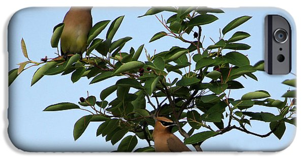 Cedar Waxwing Pair IPhone 6s Case