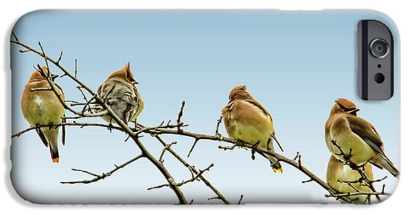 Cedar Waxwings IPhone 6s Case by Geraldine Scull
