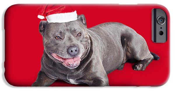 Blue Berry iPhone 6s Case - Celebrating Christmas With A Blue Staffie Dog by Jorgo Photography - Wall Art Gallery