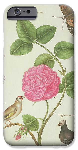 Centifolia Rose, Lavender, Tortoiseshell Butterfly, Goldfinch And Crested Pigeon IPhone 6s Case by Nicolas Robert