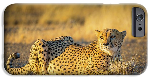Cheetah Portrait IPhone 6s Case by Inge Johnsson