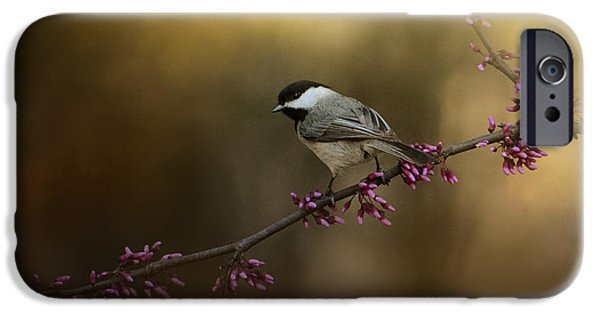 Chickadee In The Golden Light IPhone 6s Case by Jai Johnson