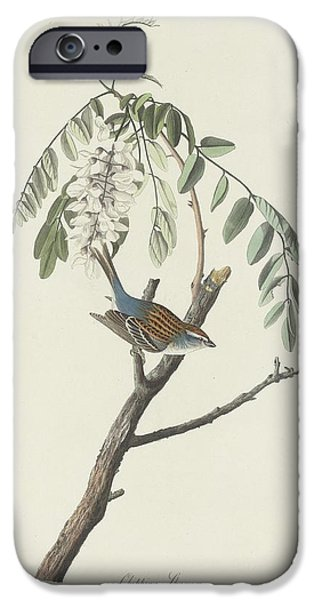 Chipping Sparrow IPhone 6s Case by Anton Oreshkin