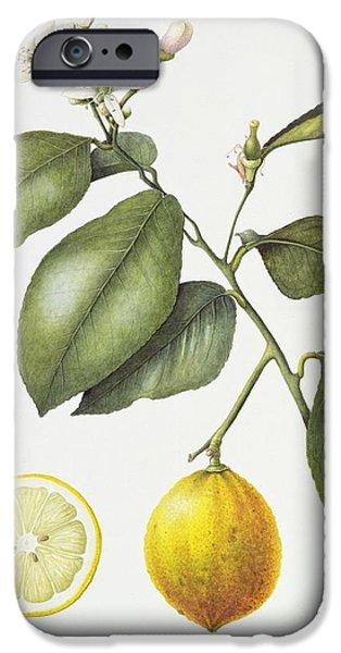Citrus Bergamot IPhone 6s Case