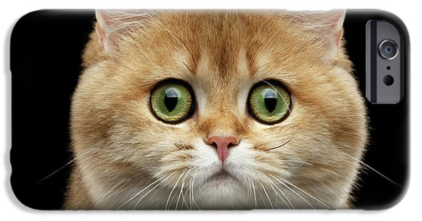 Cat iPhone 6s Case - Close-up Portrait Of Golden British Cat With Green Eyes by Sergey Taran