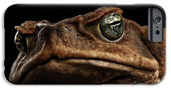 Closeup Cane Toad - Bufo Marinus, Giant Neotropical Or Marine Toad Isolated On Black Background IPhone 6s Case