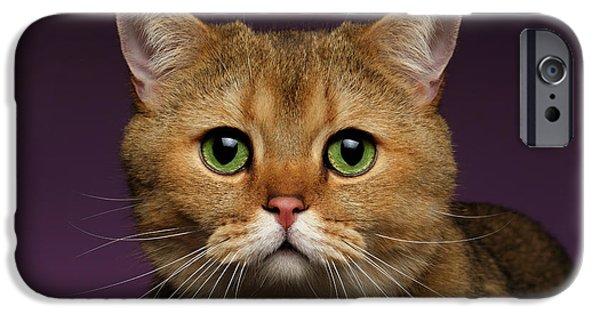 Closeup Golden British Cat With  Green Eyes On Purple  IPhone 6s Case by Sergey Taran
