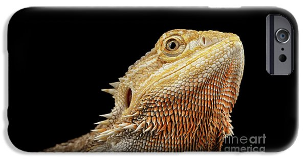 Closeup Head Of Bearded Dragon Llizard, Agama, Isolated Black Background IPhone 6s Case