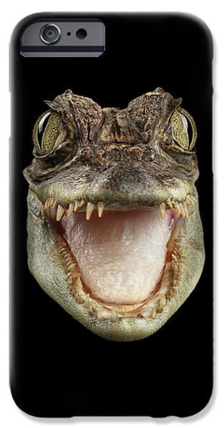 Closeup Head Of Young Cayman Crocodile , Reptile With Opened Mouth Isolated On Black Background, Fro IPhone 6s Case