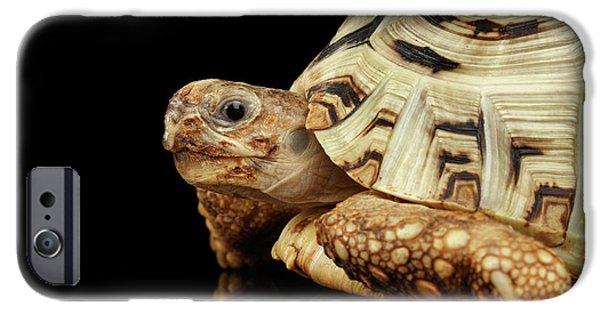 Closeup Leopard Tortoise Albino,stigmochelys Pardalis Turtle With White Shell On Isolated Black Back IPhone 6s Case by Sergey Taran