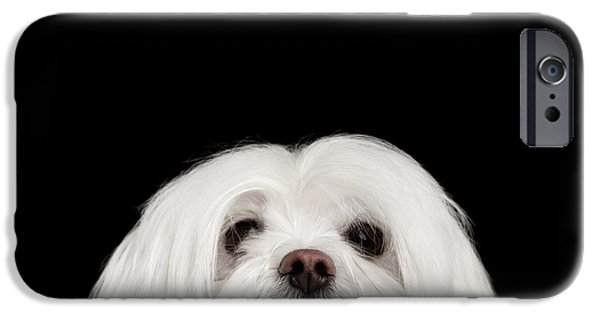 Closeup Nosey White Maltese Dog Looking In Camera Isolated On Black Background IPhone 6s Case by Sergey Taran