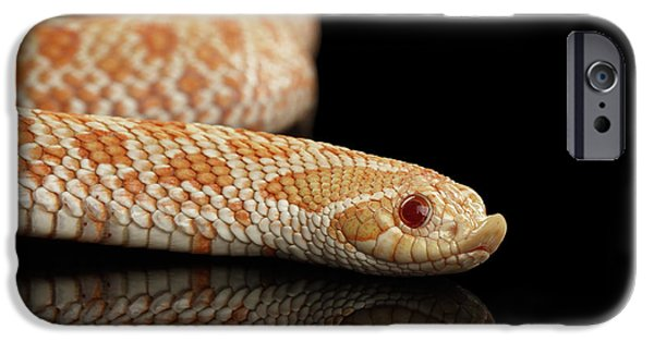Closeup Pink Pastel Albino Western Hognose Snake, Heterodon Nasicus Isolated On Black Background IPhone 6s Case by Sergey Taran