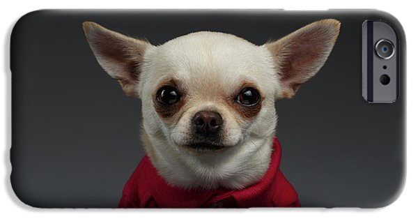 Closeup Portrait Chihuahua Dog In Stylish Clothes. Gray Background IPhone 6s Case by Sergey Taran