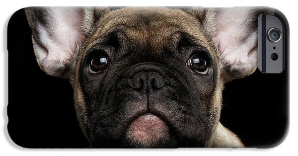 Closeup Portrait French Bulldog Puppy, Cute Looking In Camera IPhone 6s Case by Sergey Taran