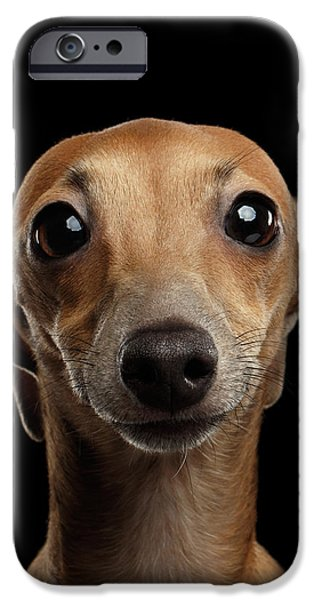 Closeup Portrait Italian Greyhound Dog Looking In Camera Isolated Black IPhone 6s Case by Sergey Taran