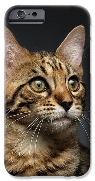 Closeup Portrait Of Bengal Male Kitty On Dark Background IPhone 6s Case by Sergey Taran