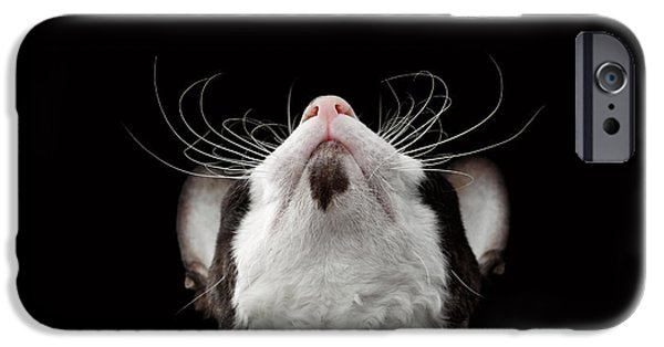 Cat iPhone 6s Case - Closeup Portrait Of Cornish Rex Looking Up Isolated On Black  by Sergey Taran