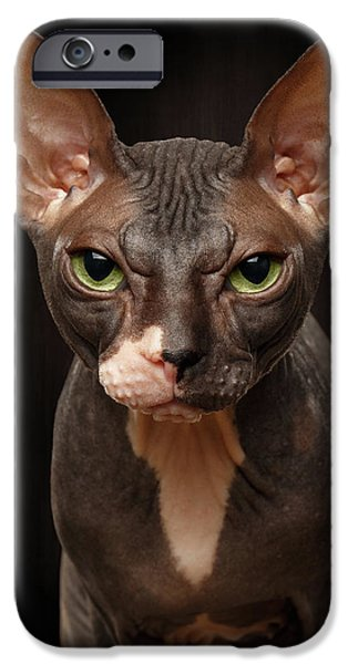 Cat iPhone 6s Case - Closeup Portrait Of Grumpy Sphynx Cat Front View On Black  by Sergey Taran