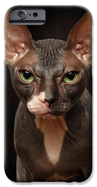 Cat iPhone 6s Case - Closeup Portrait Of Grumpy Sphynx Cat Front View On Black  by Sergey Taran