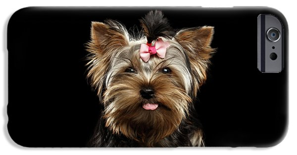 Closeup Portrait Of Yorkshire Terrier Dog On Black Background IPhone 6s Case