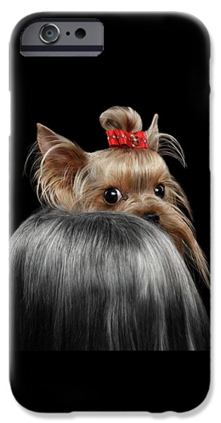 Dog iPhone 6s Case -  Closeup Yorkshire Terrier Dog, Long Groomed Hair Pity Looking Back by Sergey Taran
