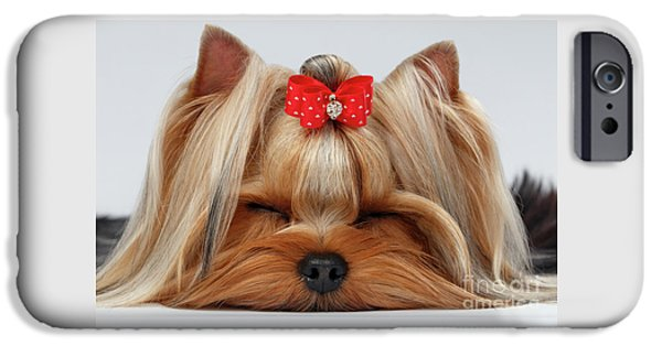 Closeup Yorkshire Terrier Dog With Closed Eyes Lying On White  IPhone 6s Case by Sergey Taran