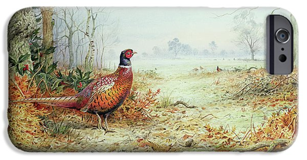 Cock Pheasant  IPhone 6s Case by Carl Donner