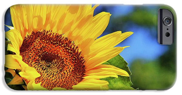 Color Me Happy Sunflower IPhone 6s Case