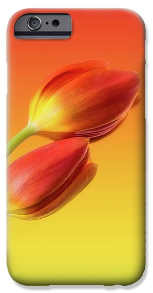 Tulip iPhone 6s Case - Colorful Tulips by Wim Lanclus