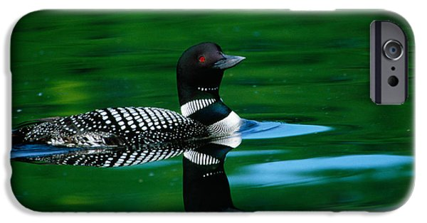 Loon iPhone 6s Case - Common Loon In Water, Michigan, Usa by Panoramic Images