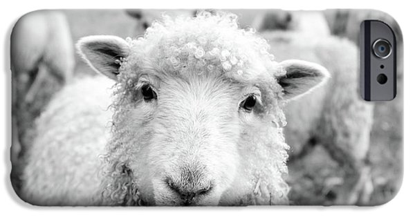 Sheep iPhone 6s Case - Contentment by Pixabay