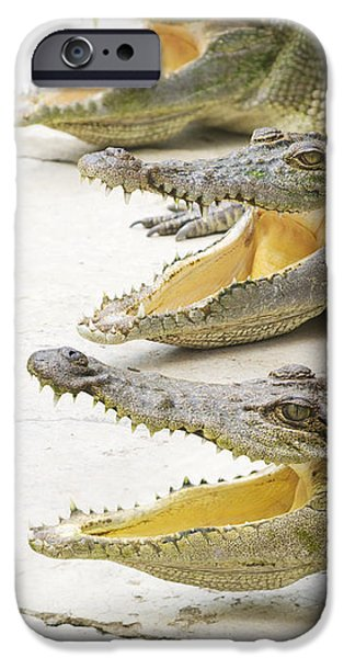 Crocodile Choir IPhone 6s Case