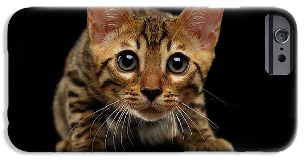 Crouching Bengal Kitty On Black  IPhone 6s Case by Sergey Taran