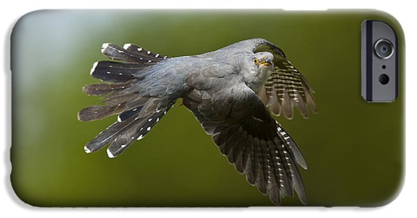 Cuckoo Flying IPhone 6s Case by Steen Drozd Lund