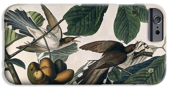 Cuckoo IPhone 6s Case by John James Audubon