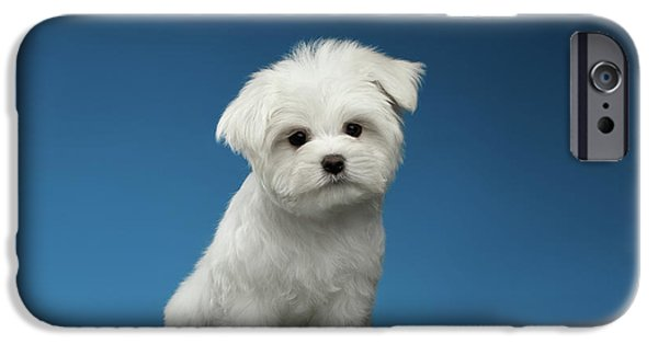 Cute Pure White Maltese Puppy Standing And Curiously Looking In Camera Isolated On Blue Background IPhone 6s Case by Sergey Taran