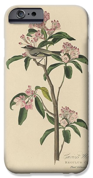 Cuvier's Wren IPhone 6s Case by Rob Dreyer