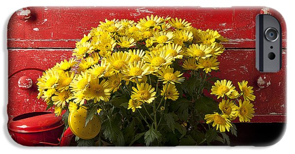 Daisy Plant In Drawers IPhone 6s Case