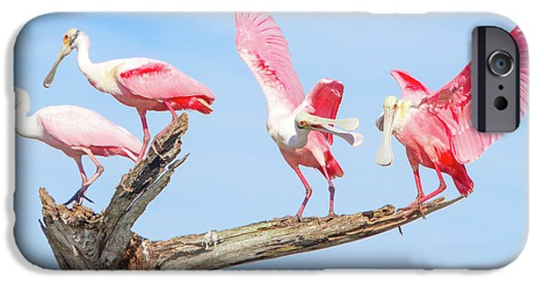 Day Of The Spoonbill  IPhone 6s Case by Mark Andrew Thomas