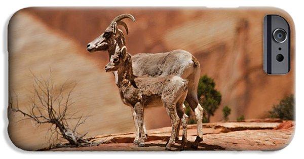 Rocky Mountain Bighorn Sheep iPhone 6s Case - Desert Bighorn Sheep by Robert Bales