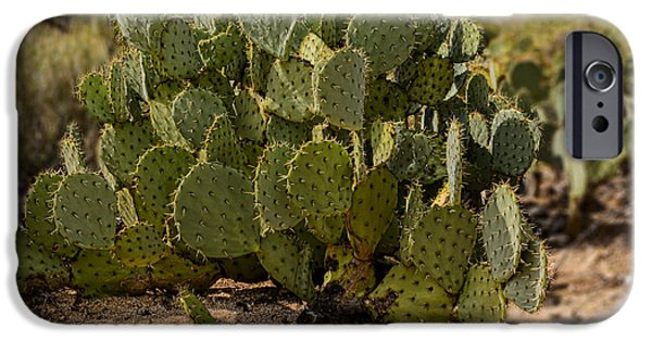 Desert Prickly-pear No6 IPhone 6s Case by Mark Myhaver