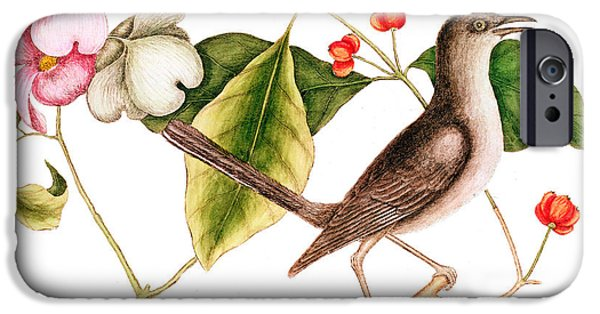 Mockingbird iPhone 6s Case - Dogwood  Cornus Florida, And Mocking Bird  by Mark Catesby